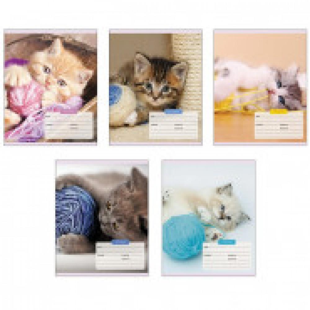 Тетрадь школьная А5,12л,клетка Игривые котята ТК126291 5 видов
